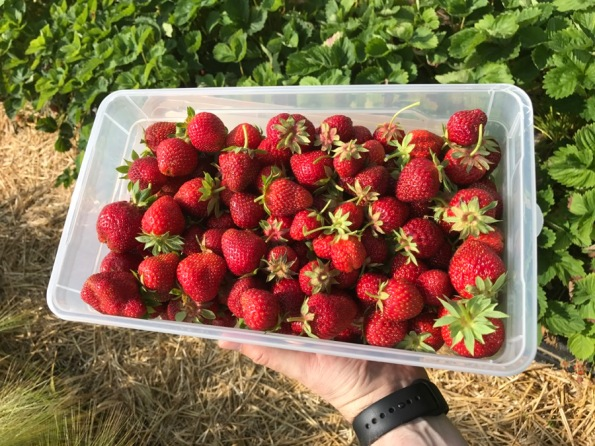 fraises_2.jpg