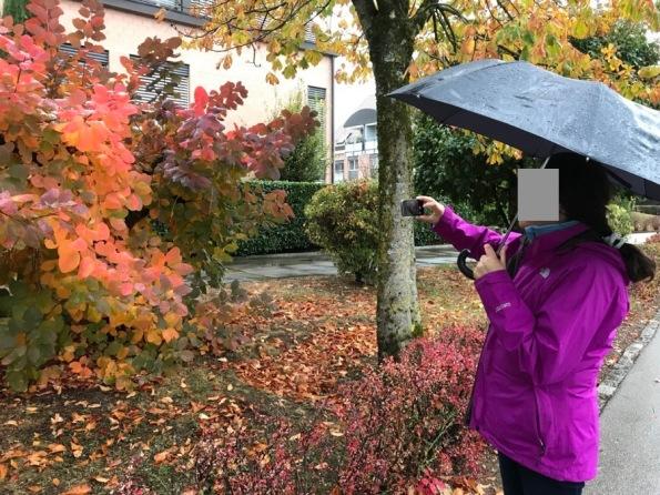 couleurs automne - 1.jpg