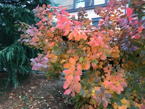 couleurs automne - 2.jpg