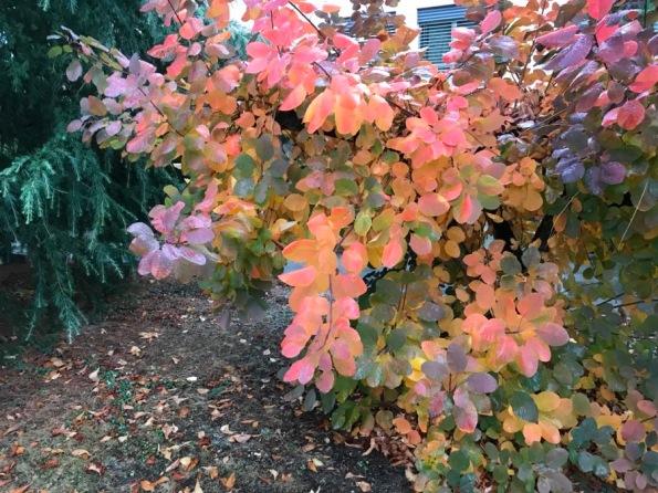 couleurs automne - 3.jpg
